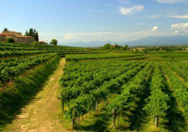 I principali eventi legati al vino del Friuli Venezia Giulia.