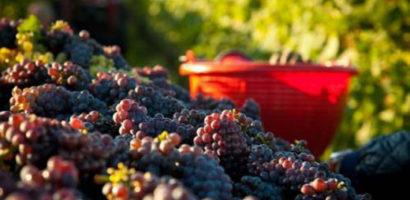 Nuovo testo unico per il vino made in Italy